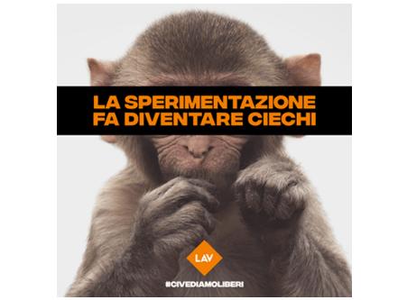 sperimentazione sugli animali